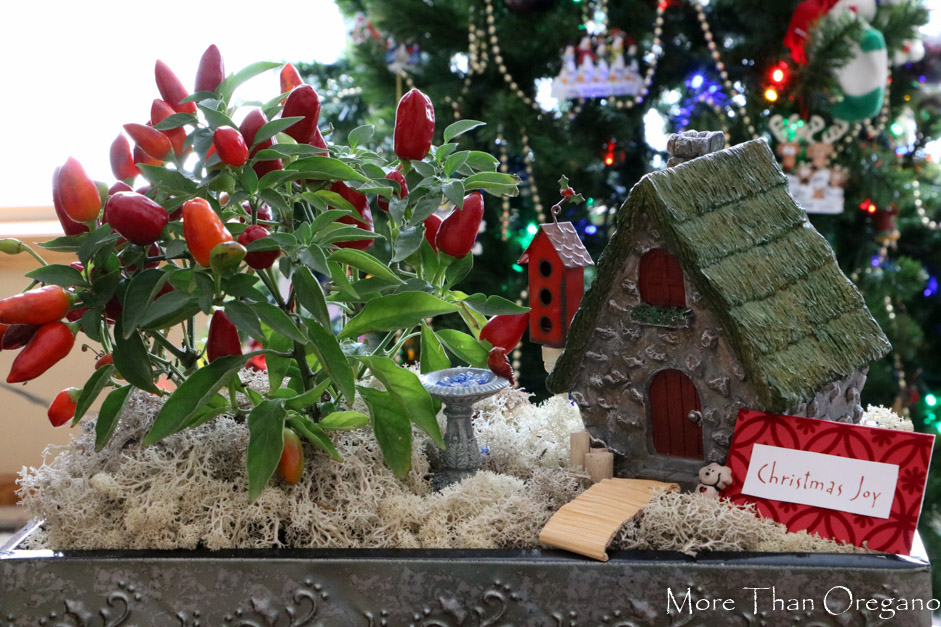 uniquely festive ornamental pepper fairy garden