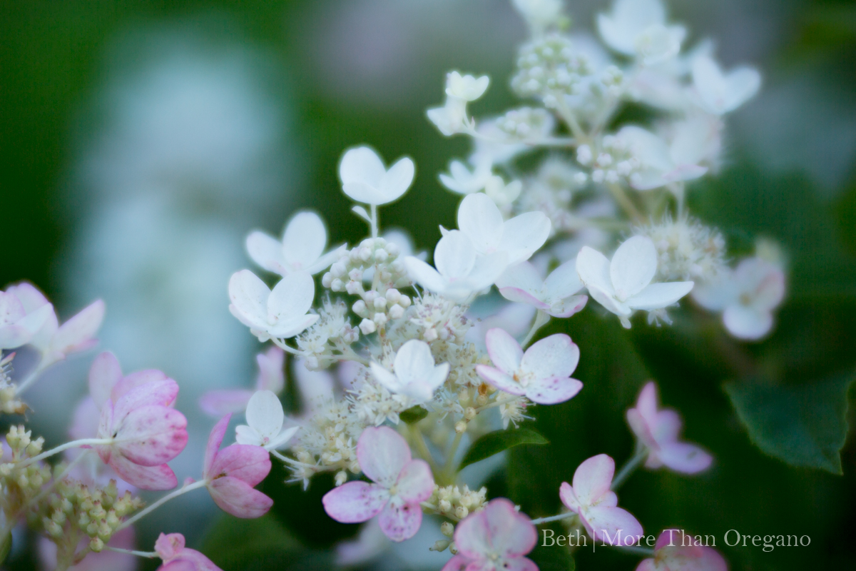Frothy Blooms