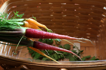 Fresh-Grown-Carrots