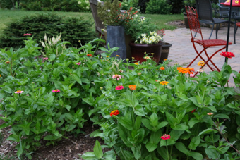 Zinnia-Patio-Border